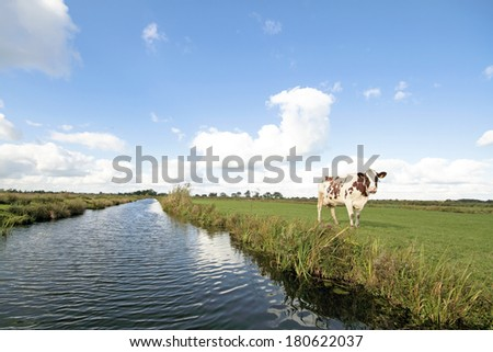 Typical wide dutch landscape with meadows, water and cloudscapes and cows - stock photo