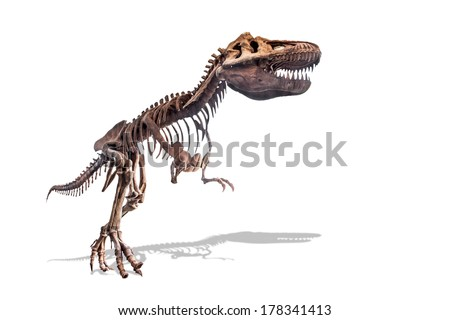 tyrannosaurus skeleton isolated on white background with clipping path - stock photo
