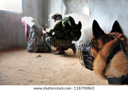 TZEELIM - MARCH 31:Israeli army attack dog during Urban Warfare Exercise on March 31 2011 in Tzeelim, Israel. Attack dogs have been used often throughout history in police and military roles. - stock photo