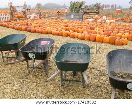 U-Pick Pumpkin Patch - stock photo