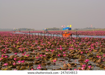 Udon Thani,Thailand - December 18,2014 : Thai tourist take boat visiting sea of red water lily festival at Nonghan lake in Udon Thani,Thailand. - stock photo