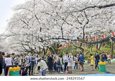 Ueno park, Japan - March 2013, Visitors came to enjoy Cherry blossom in Ueno Park , Tokyo, Japan. - stock photo