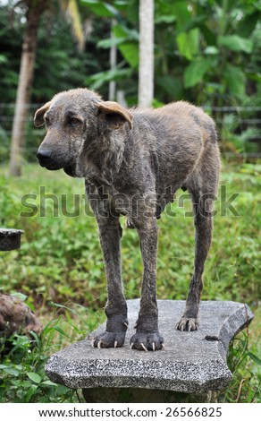 Ugly Dog Stand - stock photo