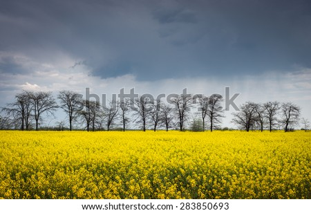Ukrainian landscape with yellow rapeseed fields and trees in spring - stock photo