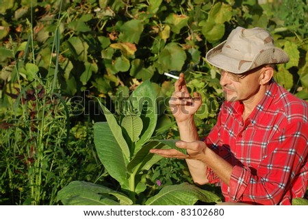 Ukrainian peasant and tobacco plant - stock photo