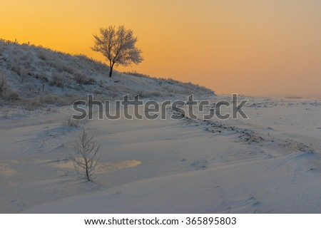 Ukrainian rural landscape with lonely apricot tree on a hill at sunset time and  winter season - stock photo