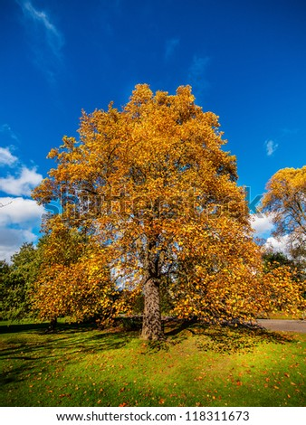 Ultra wide angle shot of a tree in a park in beautiful autumn colors - stock photo