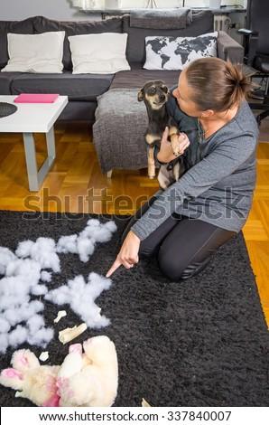 Unacceptable dog behavior - stock photo