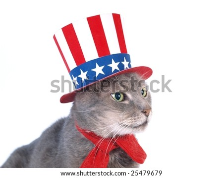 Uncle Sam cat - stock photo