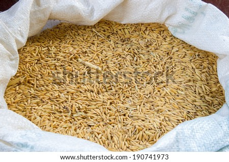 Uncooked stick rice in a bag. - stock photo
