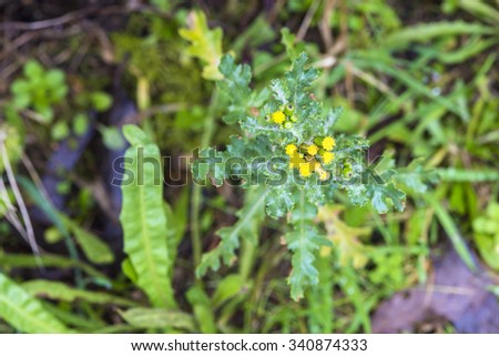 Uncultivated plants - stock photo
