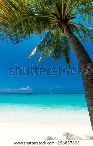 under a palm tree at the beach - stock photo