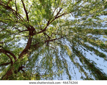 under a Weeping Willow tree - stock photo