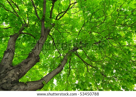 Under big green tree. Nature composition. - stock photo