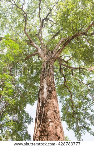 Under view of shade ; big green tree Nature composition - stock photo