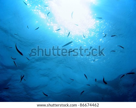 Under water surface with sun light reflection and a school of small fish, natural scene, Vermilion Coast, Mediterranean sea, Roussillon, France - stock photo