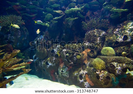 undersea world - stock photo