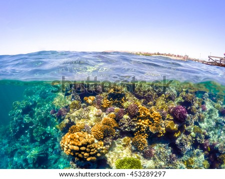 Underwater and surface split view in the tropics paradise with fish and coral reef, above waterline, beautiful view on pier on red sea. Egypt, snorkeling vacation concept - stock photo