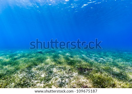 Underwater background of sunbeams cutting down through blue water and illuminating the shallow water seagrass below. - stock photo