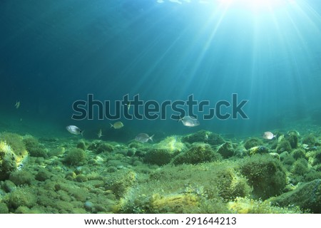 Underwater background with fish - stock photo