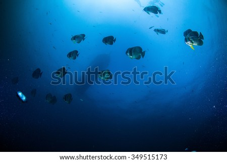 Underwater Blue Sea and butterfly fish  - stock photo