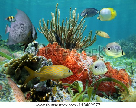 Underwater colors of marine life in a coral reef, Caribbean sea - stock photo