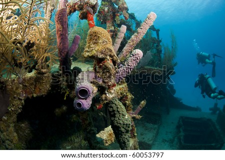 Underwater Coral gardens off the coast of Roatan Honduras - stock photo