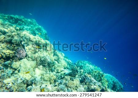 Underwater coral reef background - stock photo