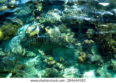 underwater coral reef background with crystal seawater - stock photo