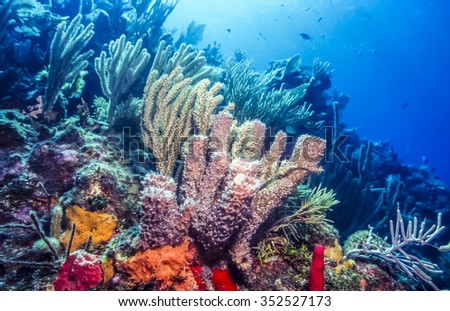 Underwater coral reef scene with purple tube sponges off the coast of Bonaire - stock photo