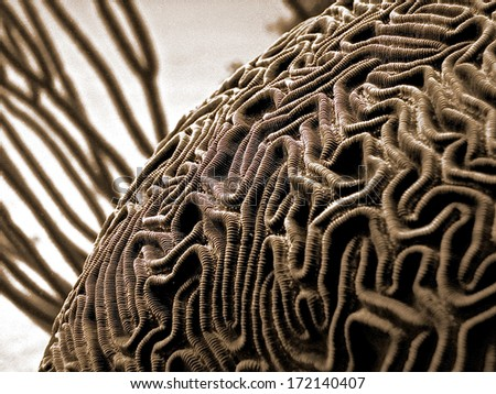 Underwater image of brain coral features sharp but very organic patterns. - stock photo