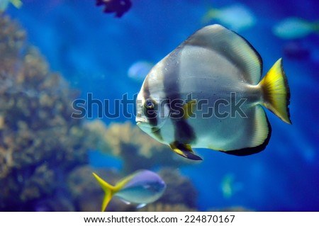underwater image of colorful tropical fish - stock photo