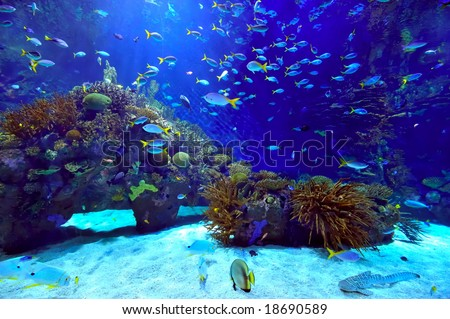 underwater image of coral reef and tropical fishes - stock photo