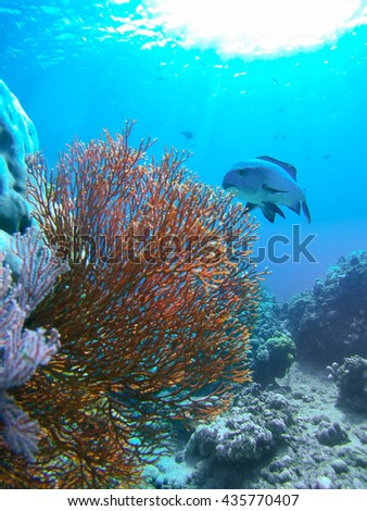 Underwater landmark and part of the main land. Amed village, Bali, Indonesia - stock photo