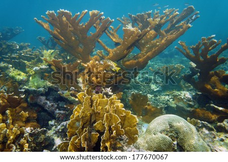 Underwater landscape in a beautiful coral reef, Atlantic ocean, Bahamas islands - stock photo