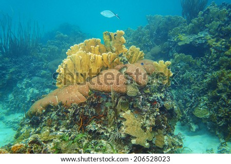 underwater landscape in a coral reef of the Caribbean sea, Mexico, Yucatan - stock photo