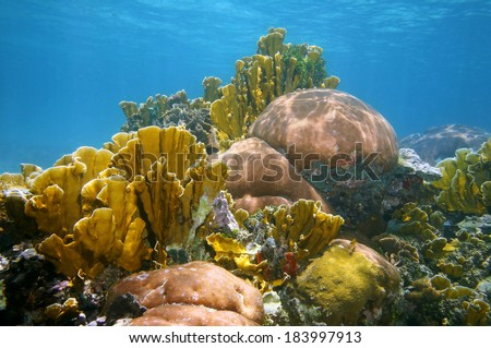 Underwater landscape in a thriving and colorful coral reef of the Caribbean sea - stock photo