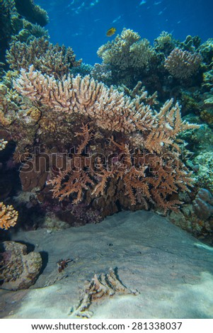 Underwater landscape. Red sea coral reef. Coral wall - stock photo