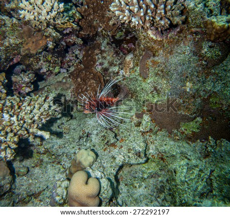 Underwater landscape. Red sea coral reef, red lionfish swimming near the bottom - stock photo