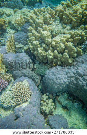 Underwater landscape. Red sea coral reef. Rock corals - stock photo