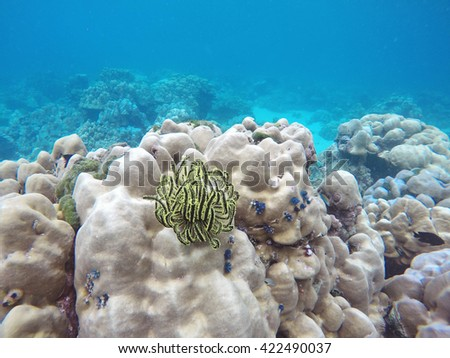 Underwater landscape with colorful Feather star and coral reef, Koh Lipe, Tarutao national park, Thailand. Snorkling and diving active sport tour concept - stock photo