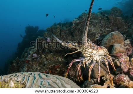 Underwater life - stock photo
