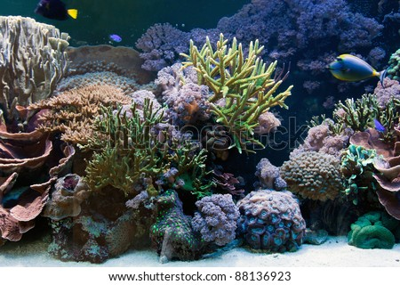 Underwater life, Fish, coral reef in ocean - stock photo