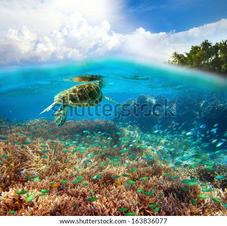 Underwater life of a coral reef - stock photo