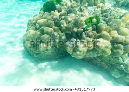 underwater life of green fish and hard coral in the sea and sand - stock photo