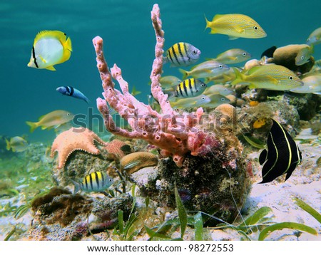 Underwater life with colorful tropical fish and a lumpy overgrowing sponge in the Caribbean sea - stock photo