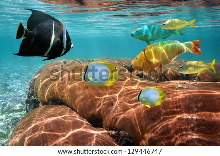 Underwater life with colorful tropical fish and coral close to water surface - stock photo