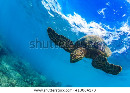 Underwater marine wildlife postcard. A turtle diving under water surface with sky image on it. Closeup image from Maui island in Hawaii - stock photo