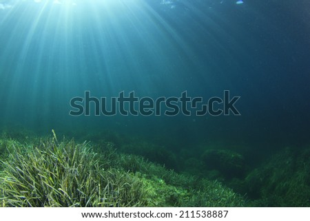 Underwater ocean background with seaweed - stock photo