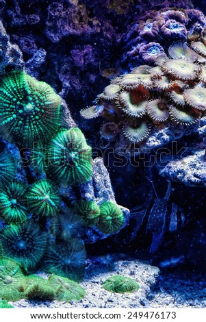 Underwater paradise with colorful fish - stock photo